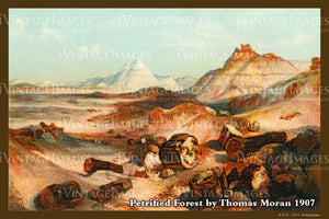 Petrified Forest Postcard 1907 - 02