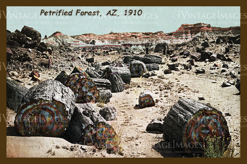 Petrified Forest Postcard 1910 - 03