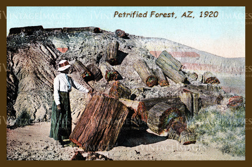 Petrified Forest Postcard 1920 - 04