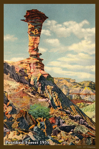 Petrified Forest Postcard 1935 - 05