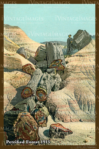 Petrified Forest Postcard 1915 - 06