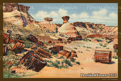 Petrified Forest Postcard 1935 - 07