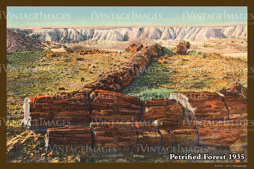 Petrified Forest Postcard 1935 - 08