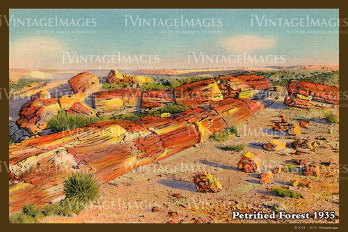 Petrified Forest Postcard 1935 - 09