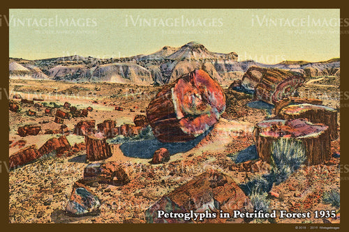 Petrified Forest Postcard 1935 - 11