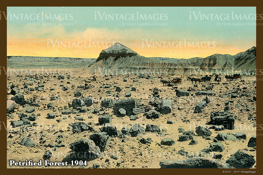 Petrified Forest Postcard 1904 - 12