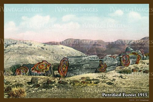 Petrified Forest Postcard 1915 - 13