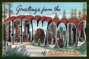 Redwood Postcard 1930 - 1