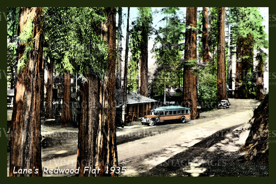 Redwood Postcard 1935 - 2
