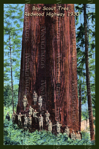 Redwood Postcard 1930 - 4