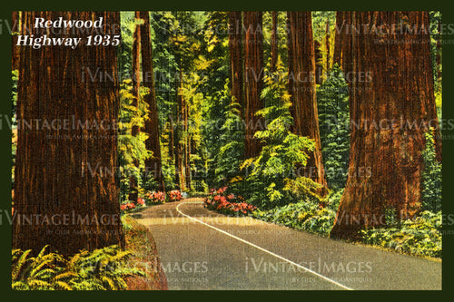 Redwood Postcard 1935 - 7