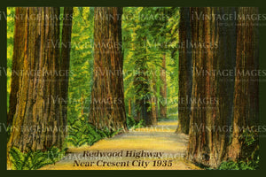 Redwood Postcard 1935 - 11