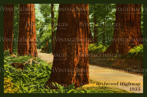 Redwood Postcard 1935 - 12