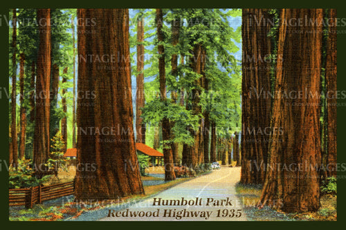 Redwood Postcard 1935 - 15