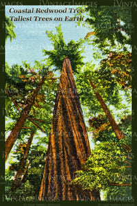 Redwood Postcard 1935 - 16