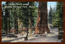 Sequoia Postcard 1925 - 1