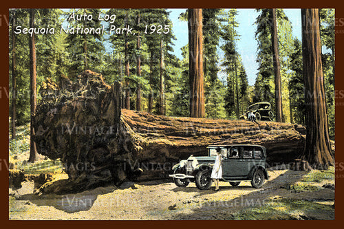 Sequoia Postcard 1925 - 4