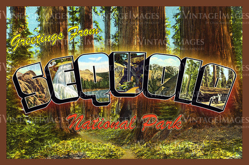 Sequoia Postcard 1930 - 5
