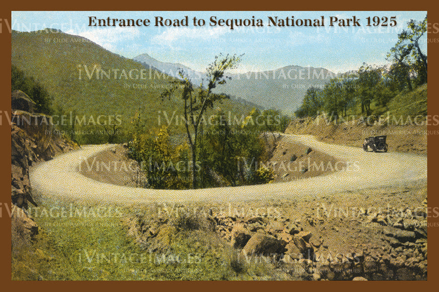 Sequoia Postcard 1925 - 6