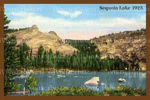 Sequoia Postcard 1925 - 7