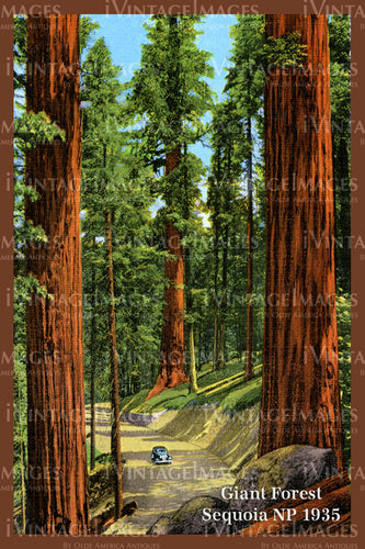 Sequoia Postcard 1935 - 12