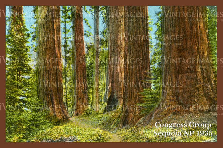 Sequoia Postcard 1935 - 13