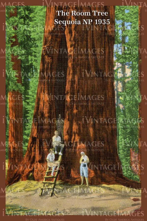 Sequoia Postcard 1935 - 14