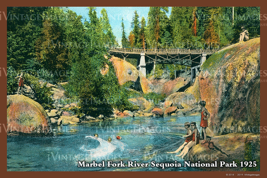 Sequoia Postcard 1925 - 16