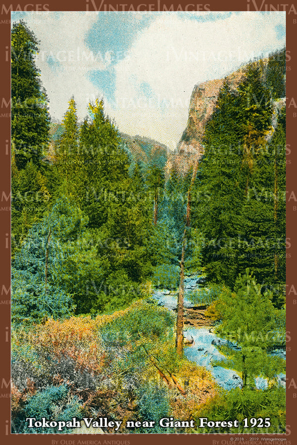 Sequoia Postcard 1925 - 18