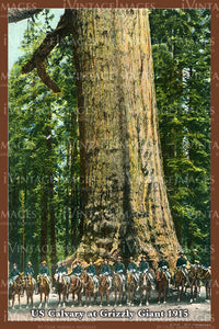 Sequoia Postcard 1915 - 20