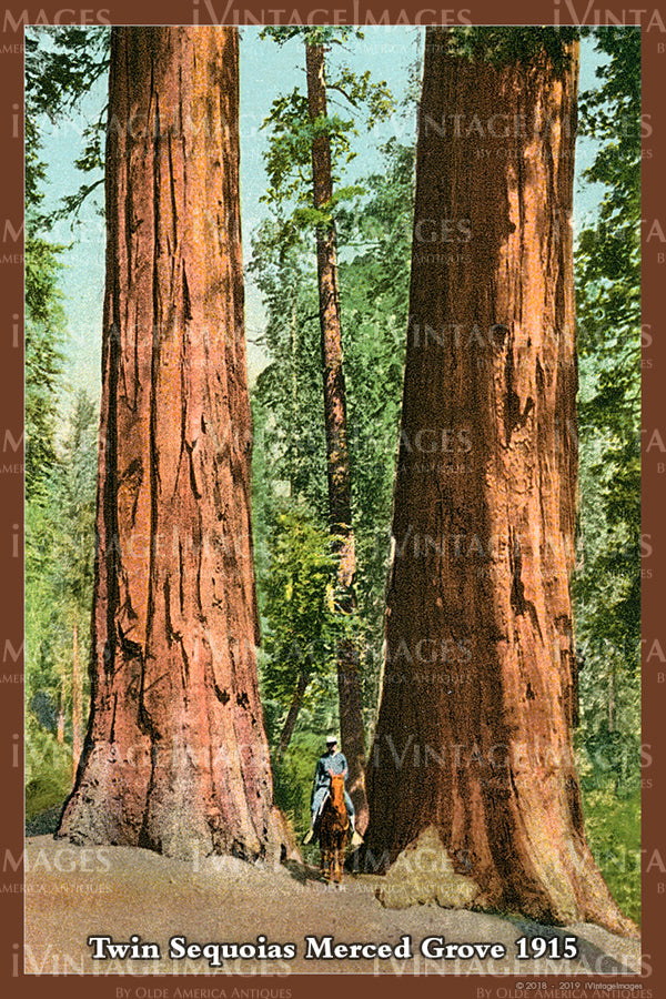 Sequoia Postcard 1915 - 21