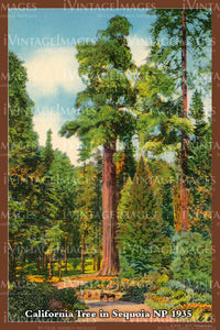 Sequoia Postcard 1935 - 25