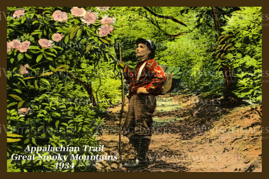 Great Smoky Mountains Postcard 1934 - 12