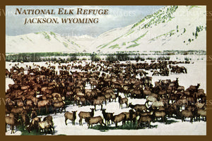 Elk Refuge Postcard 1925 - 18