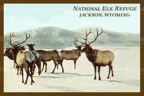 Elk Refuge Postcard 1925 - 19