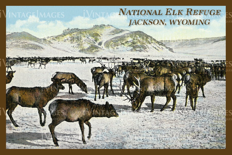 Elk Refuge Postcard 1925 - 20