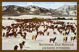 Elk Refuge Postcard 1925 - 21