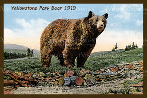 Yellowstone Postcard 1910 - 25