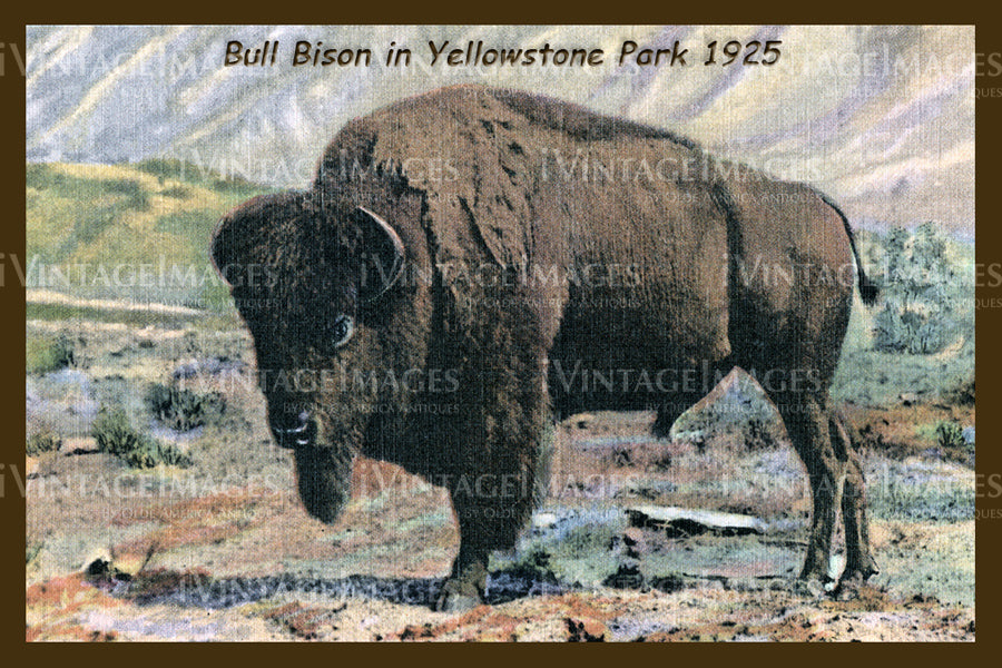 Yellowstone Postcard 1925 - 26