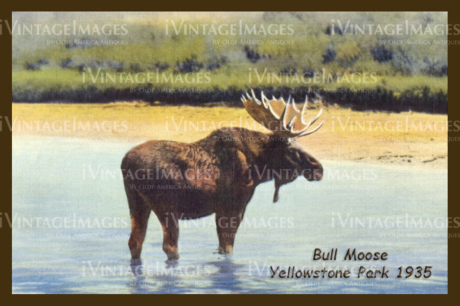 Yellowstone Postcard 1935 - 27