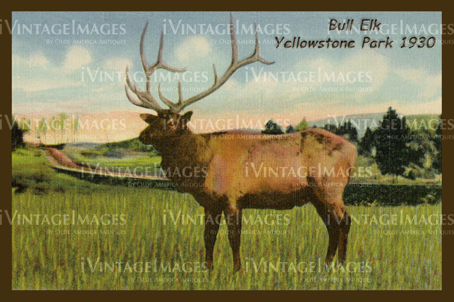 Yellowstone Postcard 1930 - 28