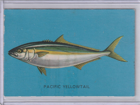 1962 Parkhurst Fish (V339-19) card #15 Pacific Yellowtail