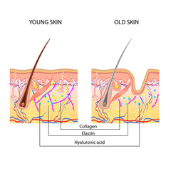 Young and old skin compared