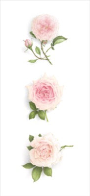 Triptych of 3 pale Roses - vertical
