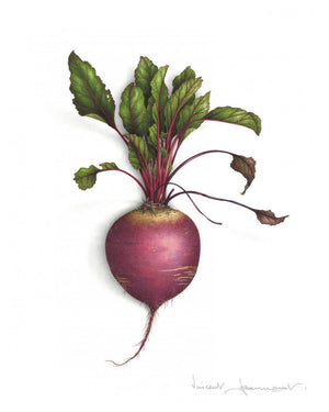 Beetroot - Rectangular sizes