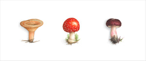 Triptych of 3 Mushrooms - Amanite/Lactaire/Russula - Horizontal