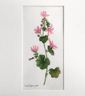 Mallow - Original watercolor