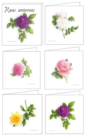 Box of 5 Cards - Antique Roses