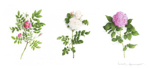 Triptych of 3 roses with foliage