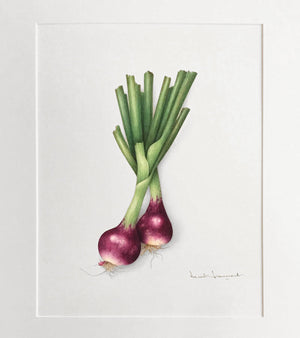 Purple onions - Original watercolor